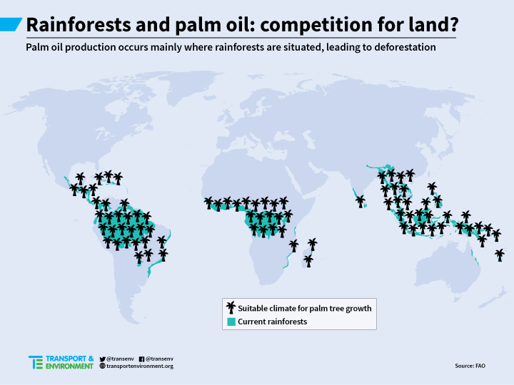 Why is palm oil biodiesel bad? | Transport & Environment