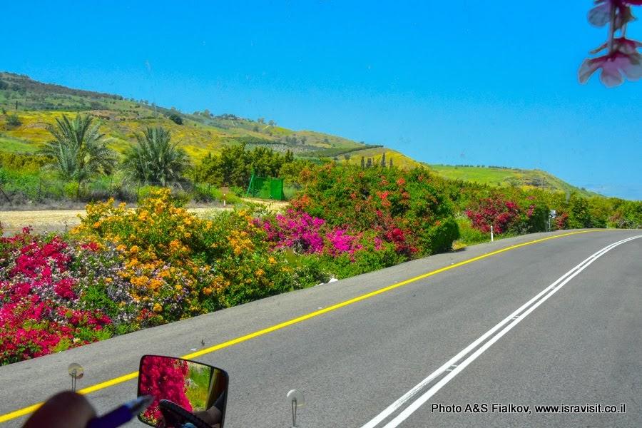 Дорога вдоль озера Кинерет. Экскурсии в Израиле.
