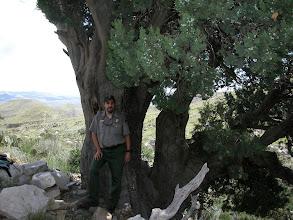 Photo: Park Ranger Dave Bieri took me to our state champion Alligator Juniper (Juniperus deppeana) above Guadalupe Spring.