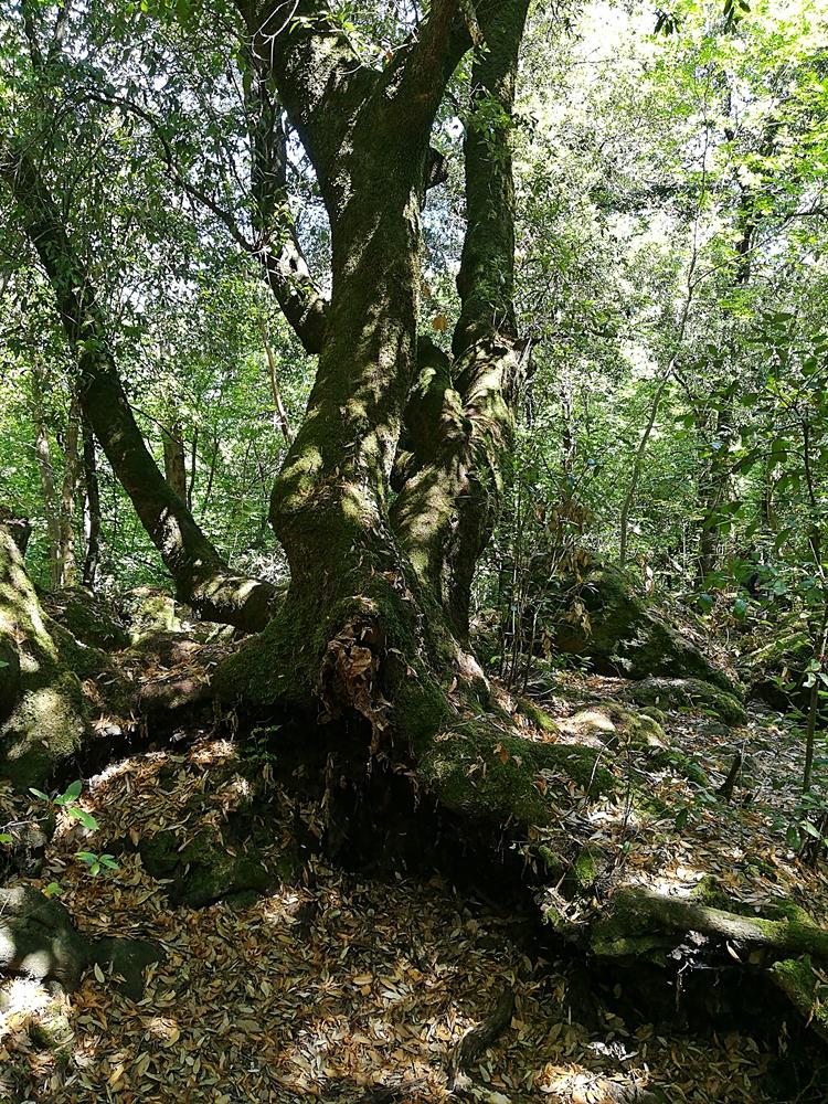 Nel mezzo del cammin di nostra vita mi ritrovai per una selva oscura di FransuaR