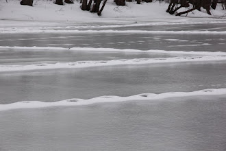 Photo: Coyote ice trails