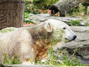 Photo: Knut macht es sich gemuetlich :-)