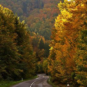 Lesnou cestou by Ján Hrmo - Landscapes Forests ( jesen, les, cesta )