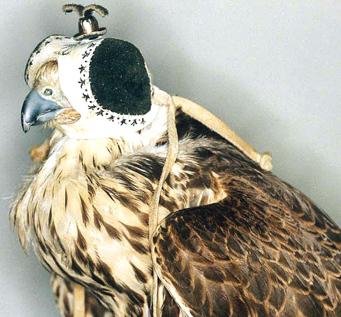 An extreme case of trichomoniasis infection in a saker falcon