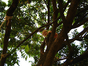 Photo: Ashley in a tree outside Spicy Thai (the nice guest house we've been staying at)