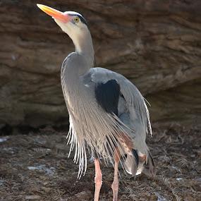 by Sathyanarayanan Shanmugam - Animals Birds