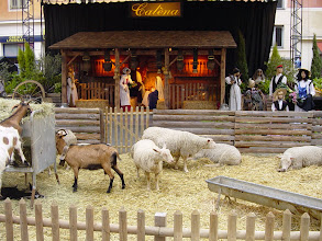 Photo: An old city church has this unusual crèche, with real goats and sheep in the foreground, but some non-Biblical dress near the manger.