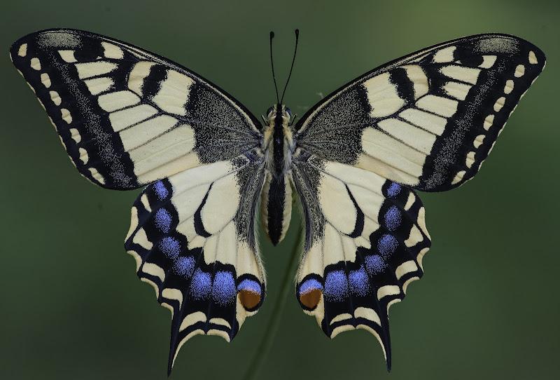 L'arte di madre natura di Gianva