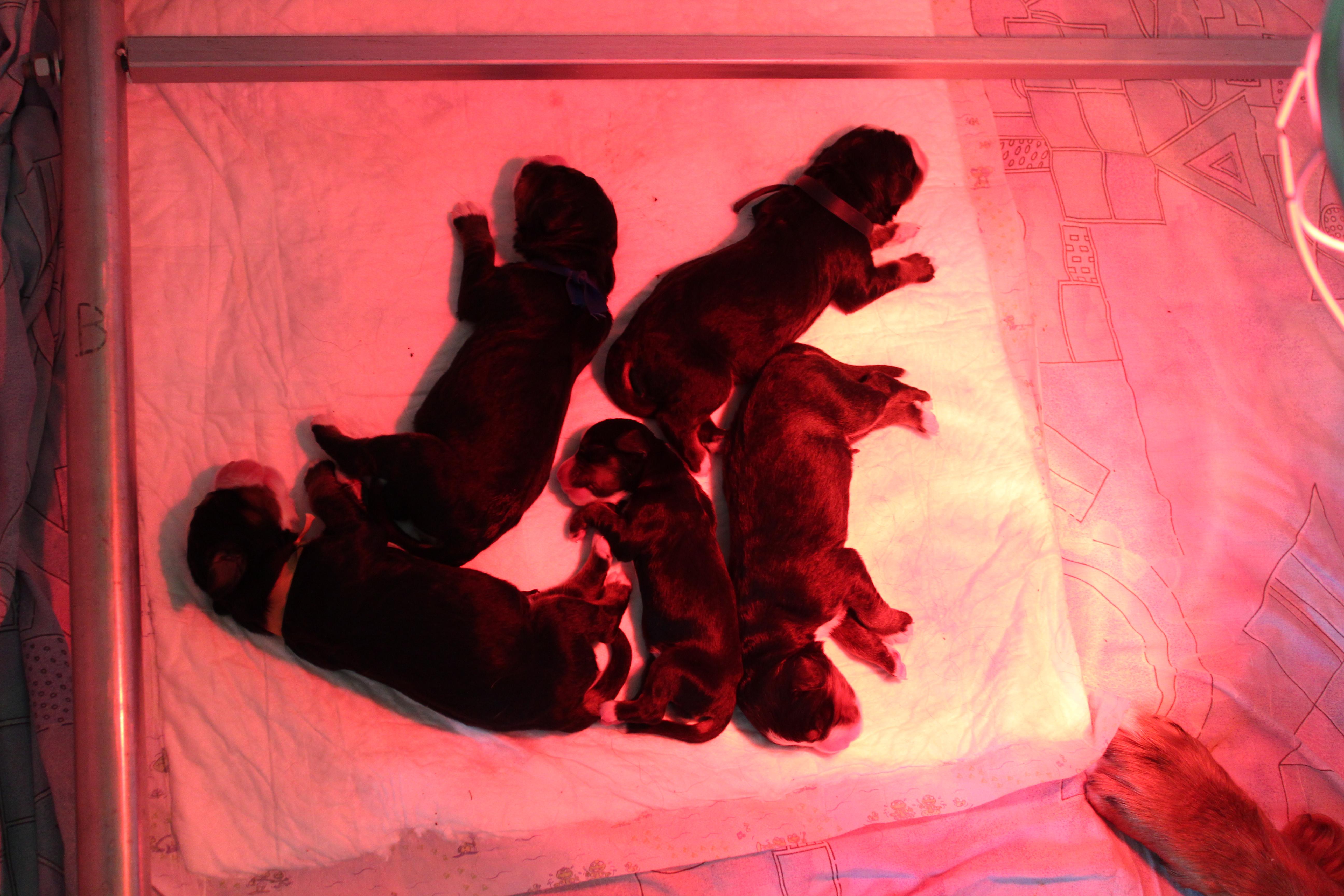 Photo: De pups hun eerste dag.