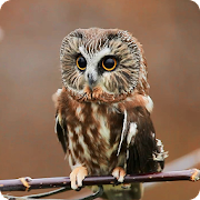 Mysterious Owl Live Wallpaper