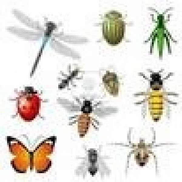 Herbs For Household Pests Recipe