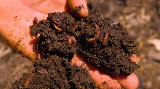 Humus de lombriz para inyectar vida a los suelos agrarios