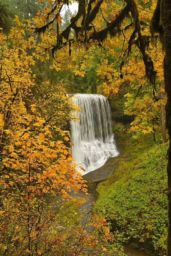 Middle North Falls by Gordon Banks - Landscapes Forests ( oregon, fall colors, silver falls state park, waterfall )