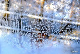 Photo: Zauberhafte Eisblumen 1
