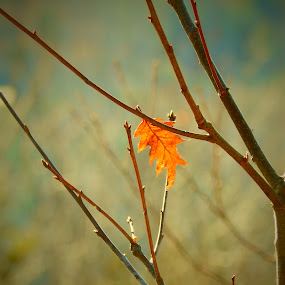 Last to Fall by Michelle Kelly - Novices Only Flowers & Plants (  )