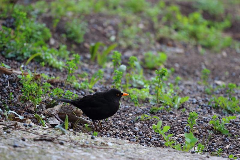 Nero in Giardino di Mado88