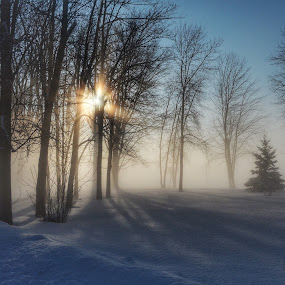 by Olivier Grau - Landscapes Weather ( amazing, soothing, fog, snow, trees, landscape, relaxing )