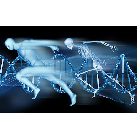 TATAA GrandPerformance® Direct Blood Genotyping Assay (ACTN3)