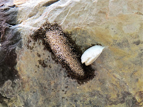 Photo: beehive