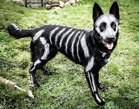Photo: Skeleton Dog