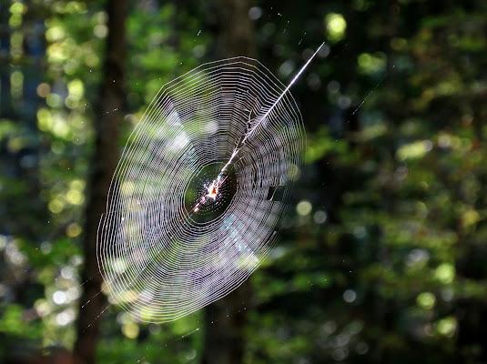 La tela del ragno di Giorgio Lucca