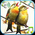 Birds Sounds & Ringtones icon