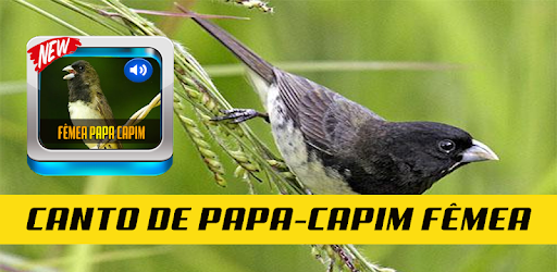 CANTOS DE CAPIM CD PASSAROS BAIXAR PAPA