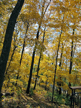 Photo: Yellow autumn leaves in the forest at Hills and Dales Metropark in Dayton, Ohio.