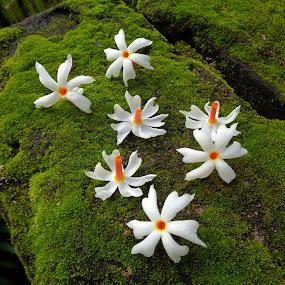 Fallen beauty  by Atreyee Sengupta - Flowers Flower Arangements