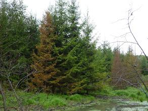 Photo: Красивые елки, снятые в режиме искусственного интеллекта. Ярче, но меньше похоже на правду
