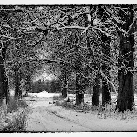 THE ROAD TO KNOW WHERE by Russell Mander - Landscapes Forests ( blocked by snow, snow, snowy  landscape, trees )