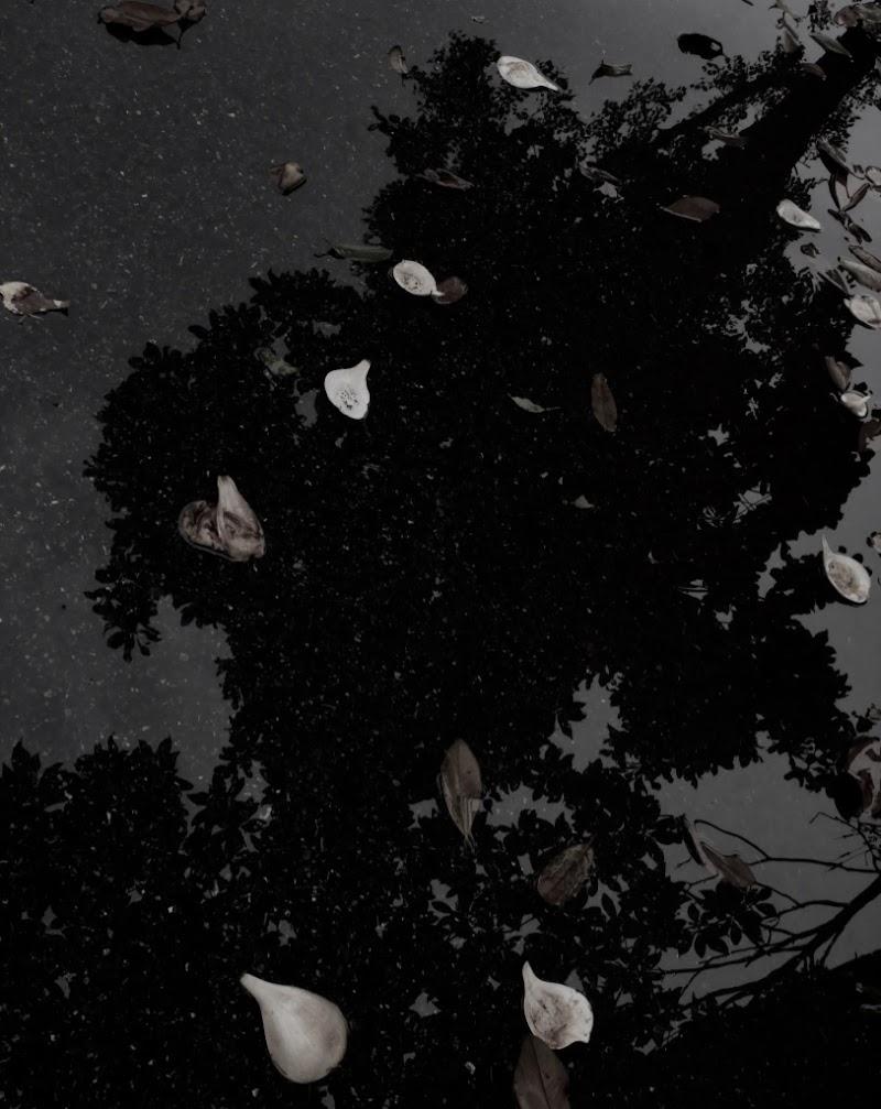 Pioggia di fiori di Francine
