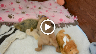 Video: A little sleepy play time