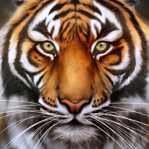 虎ライブ壁紙