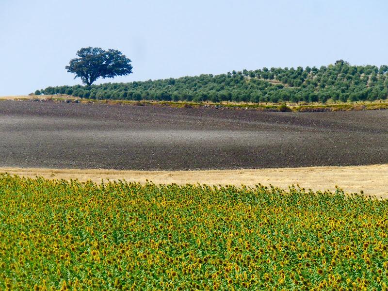 andando in Andalusia... di mariellaturlon