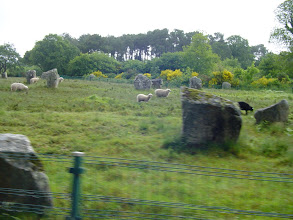 Photo: We now come to Carnac's main attraction, the famous stones. We take the tourist train to stay out of the light rain, and to see the most of the area.