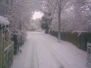 Photo: The grounds to Banovallum House, just off Horncastle Market, making a virginal scene, the trees heavy with wet snow.