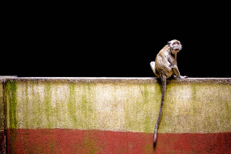 Photo: Monkey in Kuala Lumpur - from Trey Ratcliff at http://www.StuckInCustoms.com - all images Creative Commons Noncommercial