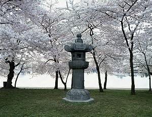 Japanese lantern near the Tidal Basin