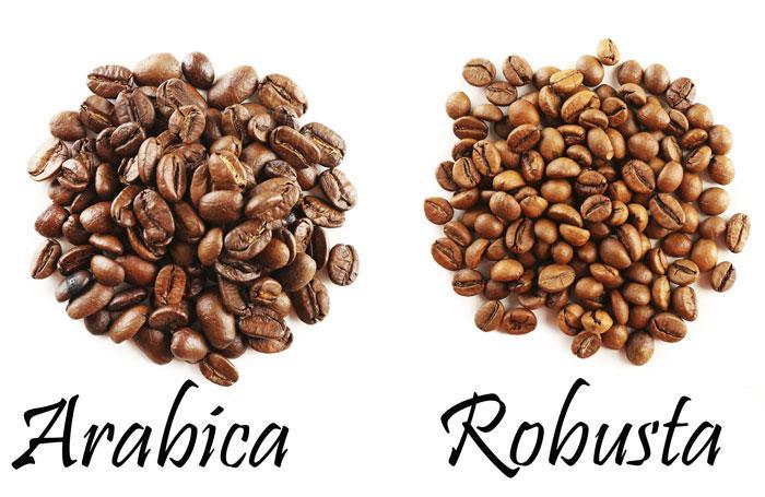 Cách nhận biết cà phê rubosta, cà phê Arabica đơn giản