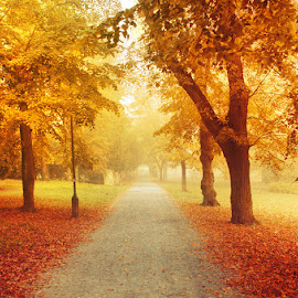 Autumn Walk LXIV. by Zsolt Zsigmond - City,  Street & Park  City Parks ( forest, road, beauty in nature, leaf, yellow, landscape, sunlight, sun, gold colored, orange color, season, tree, nature, autumn, outdoors, woodland, rural scene, october, park - man made space, sunbeam )
