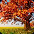 Autumn Wallpaper Best HD APK