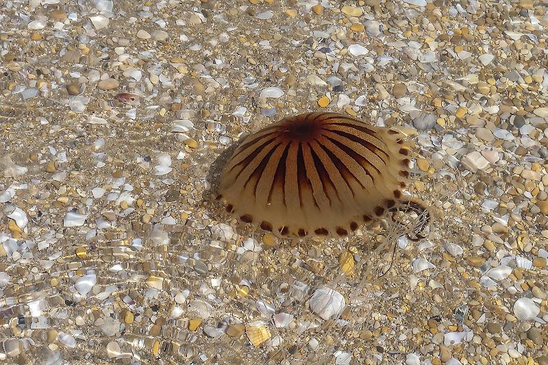 Medusa... di Wilmanna