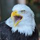 Eagle Eye Download on Windows