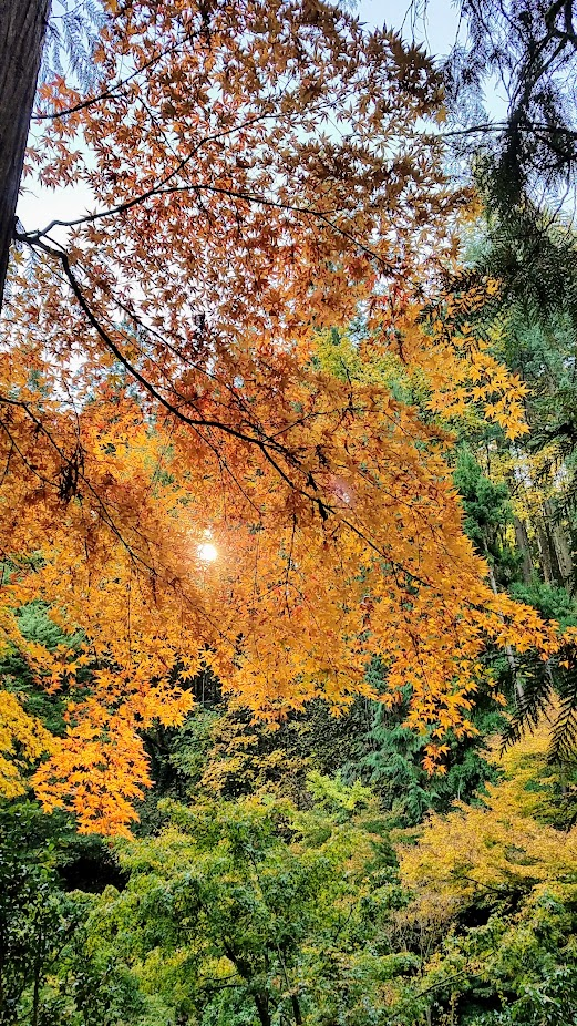 Fall at the Portland Japanese Garden, visiting for Autumn Portland Japanese Garden fall foliage photos on October 2017