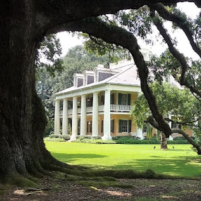 Welcome to Houmas House Plantation by Denise DuBos - Buildings & Architecture Public & Historical ( movie location, southern charm, historic, haunted, live oaks, houmas house plantation,  )