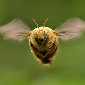 F2F by Balox Berhati Nyaman - Uncategorized All Uncategorized ( natural light, macro, nature, fly, macro photography, wildlife, insect, close up, animal )