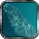 Blue Whale Live Wallpaper icon