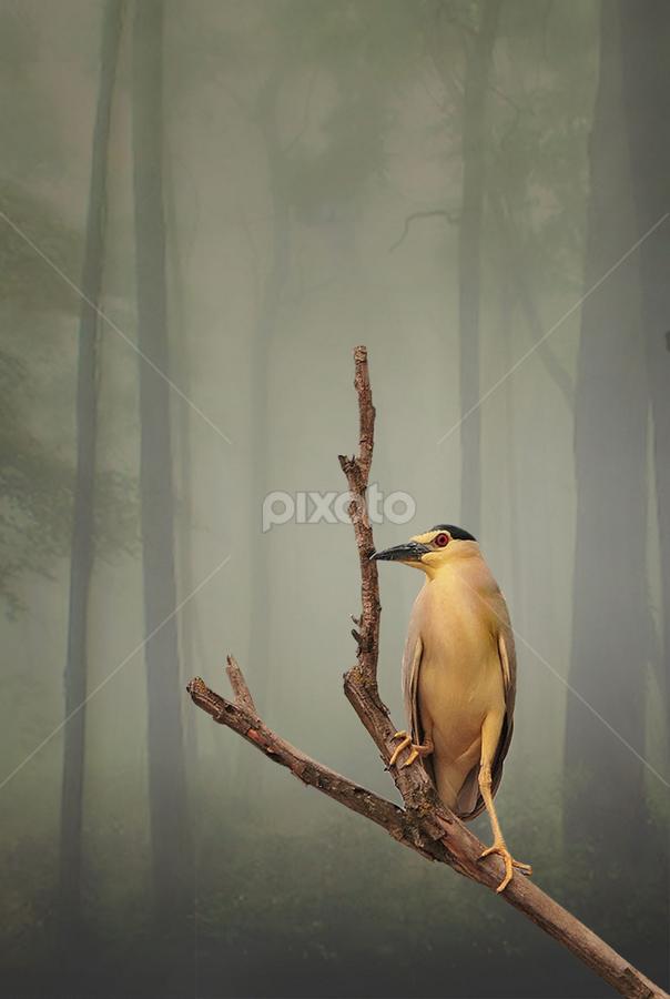 by Abus  Salim - Digital Art Things