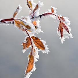 by Anngunn Dårflot - Nature Up Close Leaves & Grasses